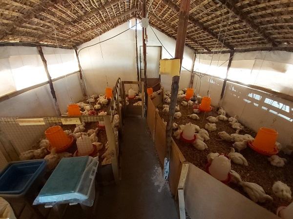 A karanténban rekedt Mária csirkéket nevel Madagaszkáron
